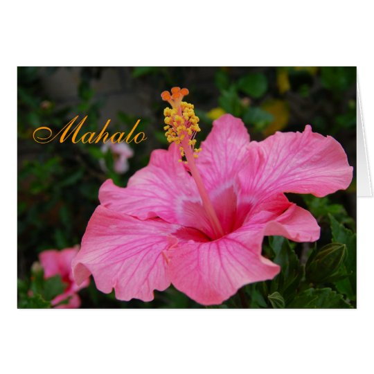 Pink Hawaii Hibiscus card