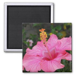 Pink Hawaii Hibiscus Square Magnet