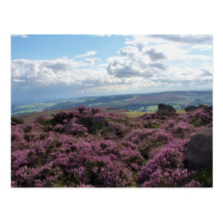 Pink Heather and Blue Sky Postcard