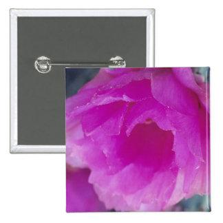 Pink Hedgehog Cactus blossom (Echinocereus 15 Cm Square Badge
