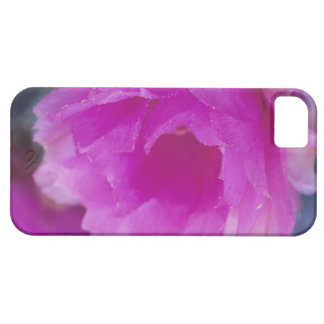 Pink Hedgehog Cactus blossom (Echinocereus iPhone 5 Covers