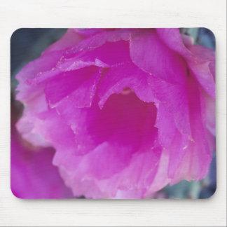 Pink Hedgehog Cactus blossom (Echinocereus Mouse Pad