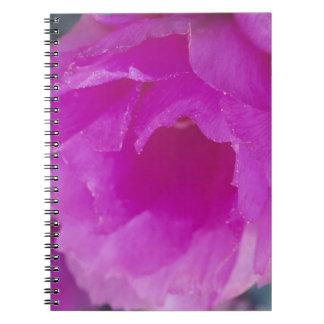 Pink Hedgehog Cactus blossom (Echinocereus Spiral Notebook