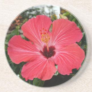 Pink Hibiscus Coaster