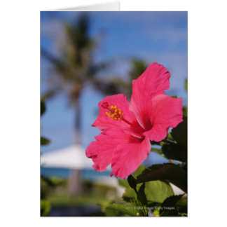 Pink hibiscus flower card