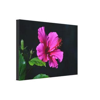 Pink Hibiscus Flower Gorgeous Canvas Canvas Print