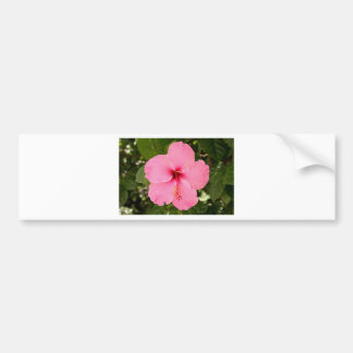 Pink Hibiscus flower in bloom Bumper Stickers
