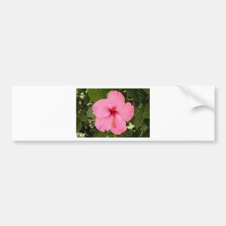 Pink Hibiscus flower in bloom Bumper Stickers