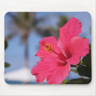 Pink hibiscus flower mouse mat