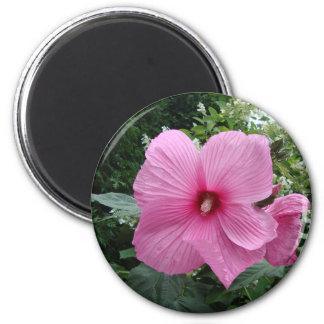 Pink Hibiscus Fridge Magnet