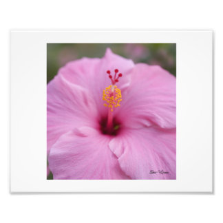 Pink Hibiscus Photo Art