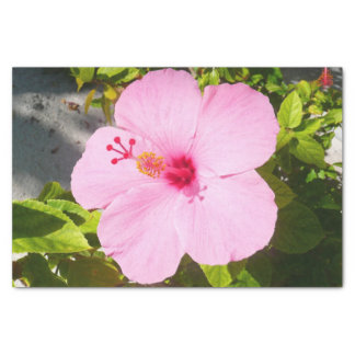 Pink Hibiscus Tropical Flower Tissue Paper