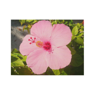 Pink Hibiscus Tropical Flower Wood Poster