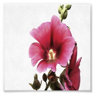 Pink Hollyhock Photo Print