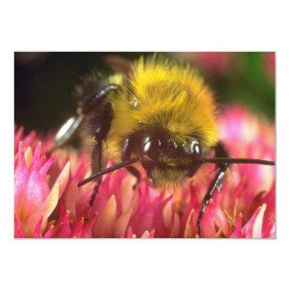 Pink Honeybee on a Burdock flower flowers Personalized Announcement
