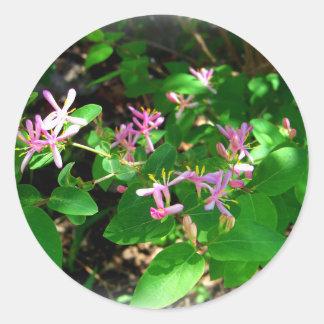 Pink Honeysuckle Garden Flowers Classic Round Sticker
