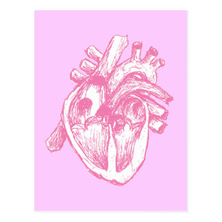 Pink Human Heart Postcard