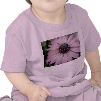 Pink Hybrid Daisy Baby Tees