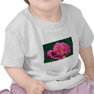 Pink Hybrid Tea Rose Tshirts