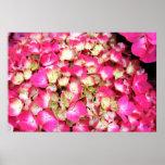 Pink Hydrangea Bouquet Poster, S Cyr