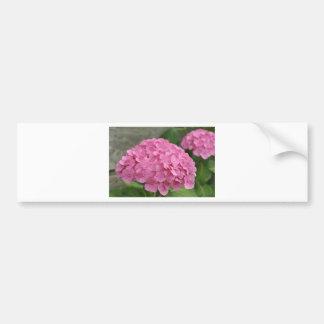 Pink Hydrangea Bumper Sticker