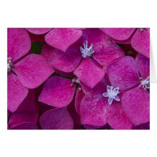 Pink Hydrangea Flowers Card