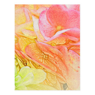 Pink Hydrangea Glow Postcard