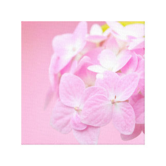 Pink Hydrangea square canvas