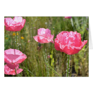 Pink Iceland Poppies Greeting Card