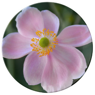 Pink japanese anemone flower plate
