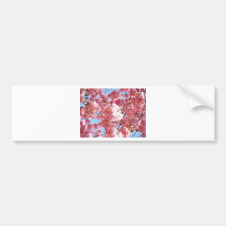 Pink Japanese Cherry Blossom Bumper Sticker