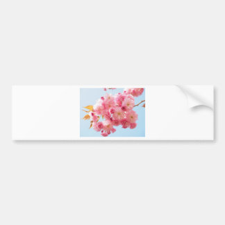 Pink Japanese Cherry Blossom Photograph Bumper Sticker