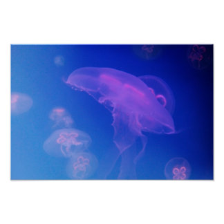 Pink jellyfishes in blue water poster