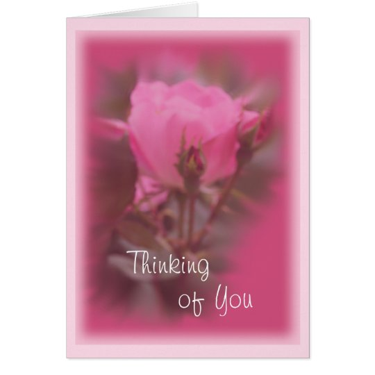 Pink Knockout Rose card- any occasion Card