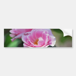 Pink lacy rose and meaning bumper sticker