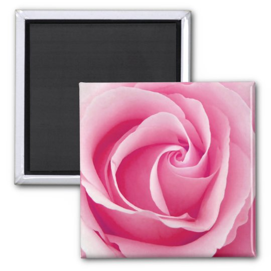 Pink Lady Rose Magnet - Square