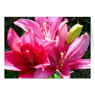 Pink Lilies in Bloom Card