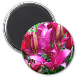 Pink Lilies Magnets