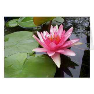 Pink Lilly in Pond Greeting Card
