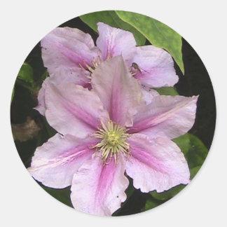 Pink Lily ( Clematis) Sticker