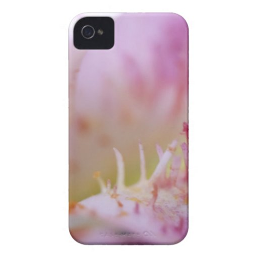 Pink Lily Macro iPhone 4 Case-Mate Case
