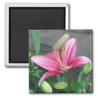 Pink Lily Magnet