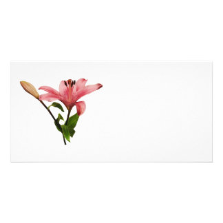 Pink Lily With Bud Photo Greeting Card