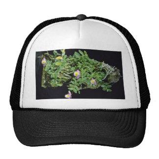 Pink Lodgesii (Dendrobium) flowers Hats