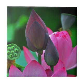 Pink Lotus Blossoms Small Square Tile