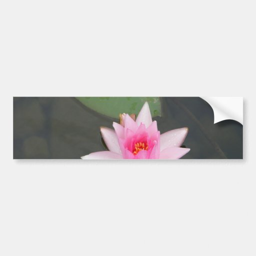 Pink Lotus Flower Bumper Stickers