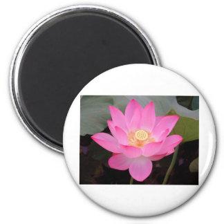 Pink Lotus Flower In Bloom 6 Cm Round Magnet
