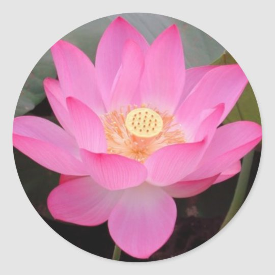 Pink Lotus Flower In Bloom Round Sticker