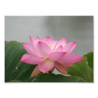 Pink Lotus flower Photo Print