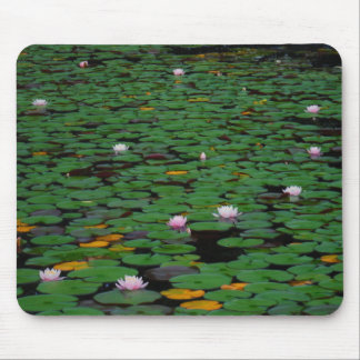 Pink lotus water lily flower pond mouse pad